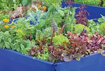 We Love Blue in the Garden! / by Gardener's Supply Company