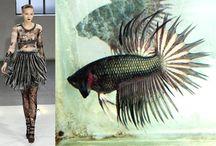 Fish and Fashion