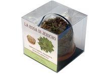 EcoClass - Rosa di Jericho / Importata direttamente, selezionata, pulita e confezionata per vendita ingrosso e al dettaglio. Ideale come bomboniera.