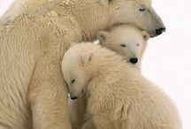bears plus more…