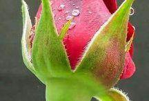 φωτο λουλουδια