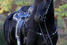 Horses / by Anne Baker