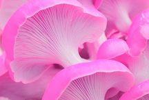 Розовый мир