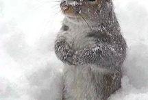 Tierliebe | Animal lovers / Süsse und spezielle Tiere rund um den Globus. Einfach weil die Bilder schön anzusehen sind. | Pics of cute animals. Just because...