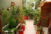 Jardin de Invierno / Ideas para un jardín de invierno con material reciclado. Adornos.