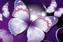 Paars/Purple.