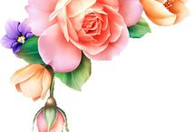 bloemen alle seizoenen