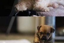 Cute / The cutest animals