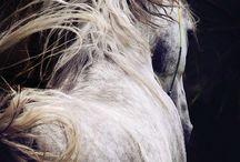 Fryzury koni