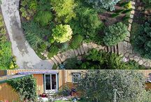 Хвойные растения / Выращивание, размножение хвойных растений