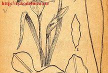 Выкройки цветы из кожи