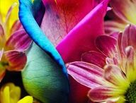 flowers / by Laurie Treuvey