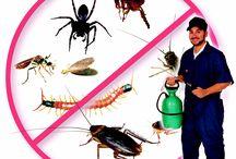 Exterminator services in Brisbane
