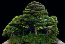 bonsai grouping