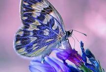 Butterfly / by Miranda Ann Wiley