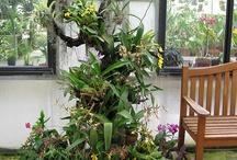 Garden - Airplants