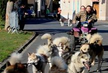 Course verte 2016 / course chronométrée de chiens de traineau
