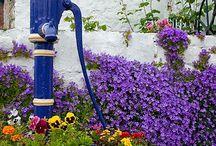 Jardim / Jardins: lugar de paz, beleza,perfume, encantamento, singelezas...pedacinhos de céu.