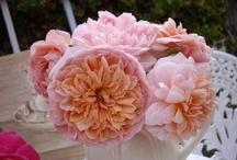 My One day Rose Garden