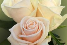 August flowers for Reannah / Blush, cream and white flowers
