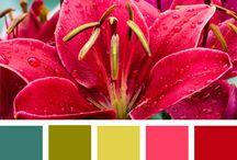Colors / color inspiration