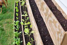 Выращивание трав и специй