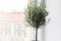 Planter og trær