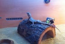 Hollie The Bearded Dragon