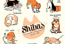 Shibas / by Jenny Singh