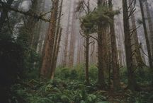 Line Forest