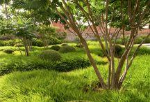 Trawy - Grasses