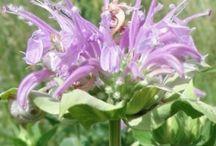 SANTE : les Plantes pour se soigner