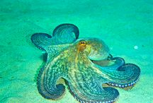 z Animals Ocean Creatures