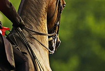 Horses / by Michelle Sprunger