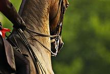Equine Affair