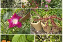 the zone 3 garden