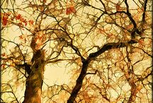 Trees / Arr