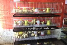 chick cage / Chick cages or pullet cage consist of two types, A type and vertical H type, which is applicable to various kinds of chicken house(opened type, half-opened type, closed type).