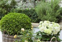 Tuin en buitenboel