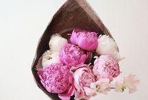 In Bloom / by Fabiana Bartorilla