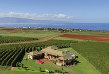 Kaanapali Coffee Farms Real Estate / Exclusive West Maui agricultural community in Hawaii right outside of Lahaina. Located on the side of the West Maui Mountains overlooking the Kaanapali Resort. Build you own home away from the hustle and bustle and enjoy this rural setting while still being close to beaches, shopping, dining and resort amenities.