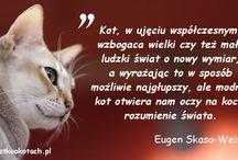 Cytaty o kotach / Co znani ludzie mówią o kotach