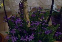 Növények @-}--