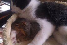 So cute.. / Because I love animals <3