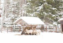 Hochzeit im Winter-Wonderland / Winter-Wedding / Ein winterliches Inspirations-Shooting im Schwarzwald