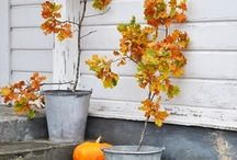 Garden inspiration - Autumn