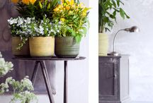 All About Inside Out / Lilies in pot have a double function, they are not only beautiful to use as an indoorplant, they also love to be outside on your terrace.