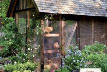 Chicken & Chicken Coop