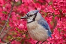 BIRDS / by Belinda Marlatt