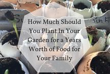 Gardening for Everyone / Tips and tricks for simple-but-stunning gardens, and busting-full-of-nutrients vegetable patches, wherever in the world you live!